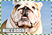 Dogs: Bulldogs