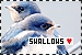 Birds: Swallows