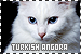 Cats: Turkish Angora