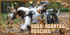 Dogs: Adopted and Rescued: