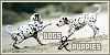 Dogs/Puppies: